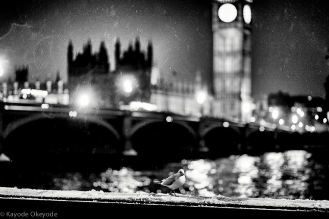 Westminster_and_gull